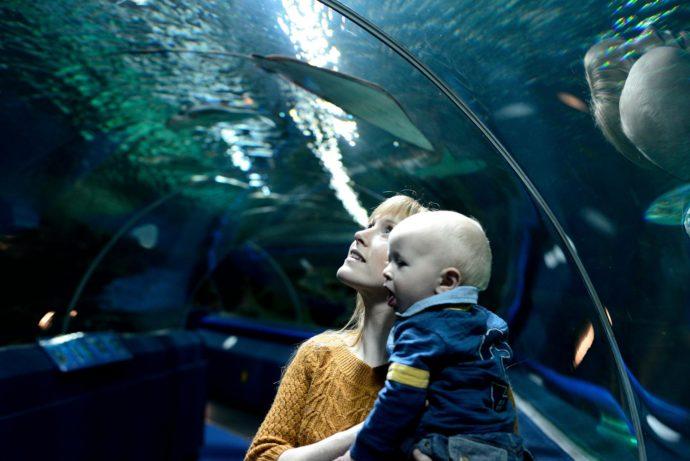 blue planet aquarium cheshire