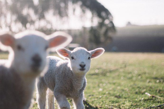 Farms - kids spring activities