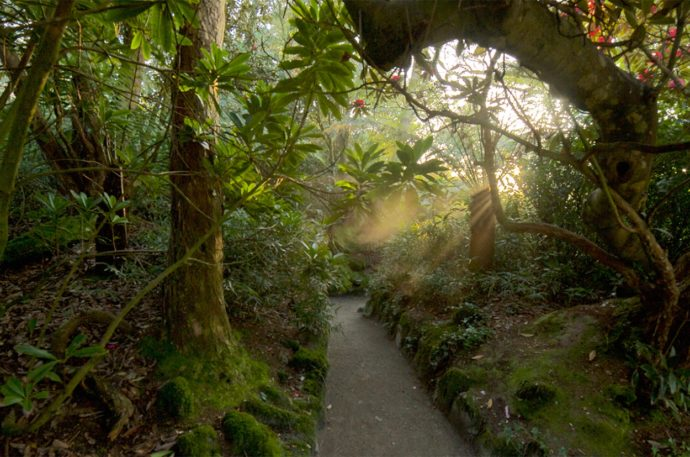 lost-gardens-of-heligan-cornwall