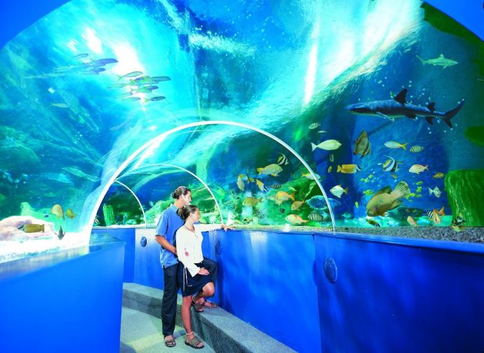 Blue Reef Aquarium - things to do in Cornwall with kids