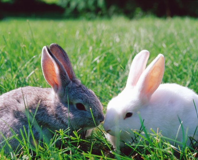 Rabbits - city farms in london