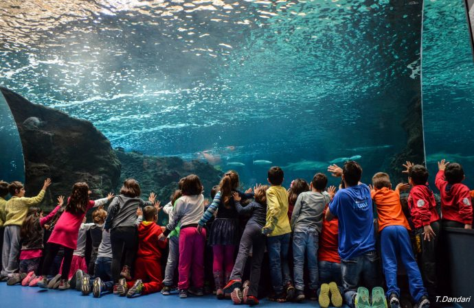 CretAquarium - things to do in crete with kids