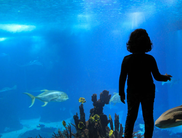 Lisbon with Kids Oceanarium