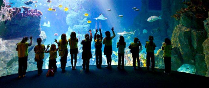 National Marine Aquarium - things to do in devon in the rain