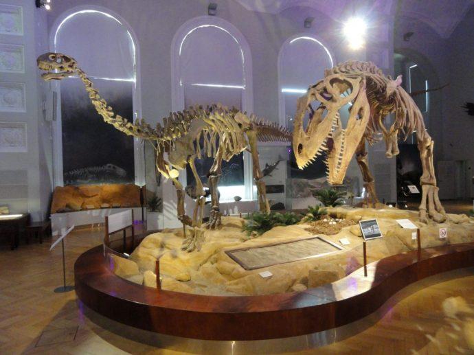 Museum of National History - activities in helsinki