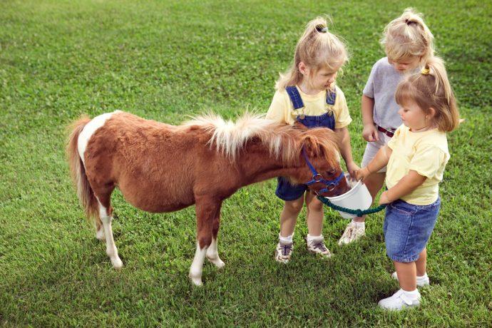 Kids feeding Poney - city farms in london