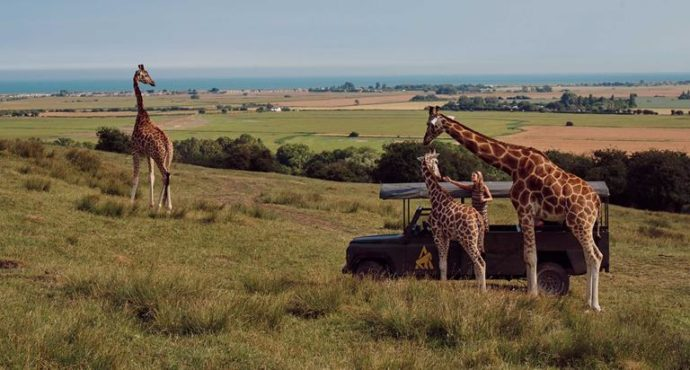 Port Lympne Wildlife Park - Family Days Out in Kent with Kids
