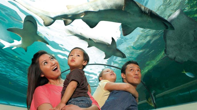 Sea Life Great Yarmouth - things to do in norfolk when it rains