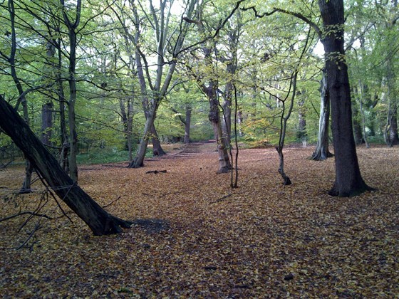 Best Forests to Hike with Children in London