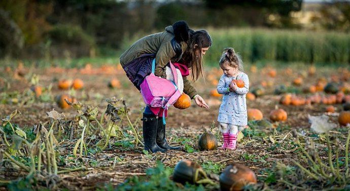 CFP Pumpkin Picking