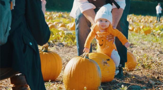 Pumpkin Picking at Tulleys