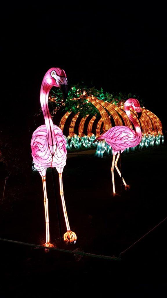 Jardin des Plantes - Illumination