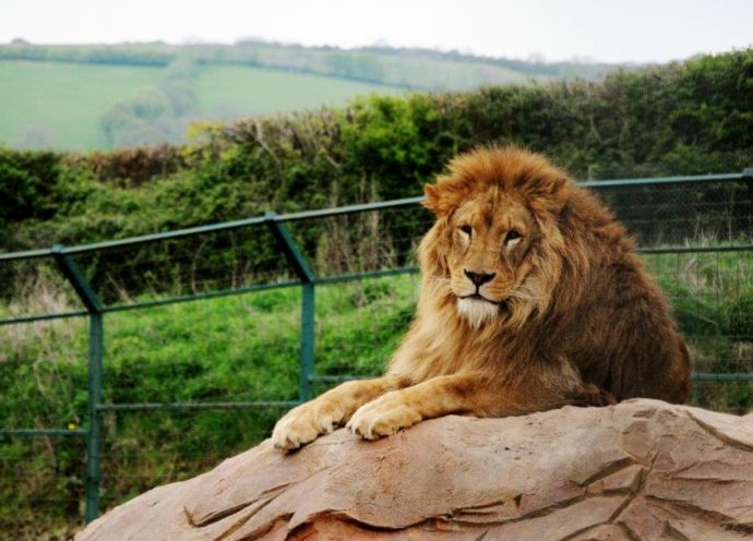 Combe martin wildlife and dinosaurs parks