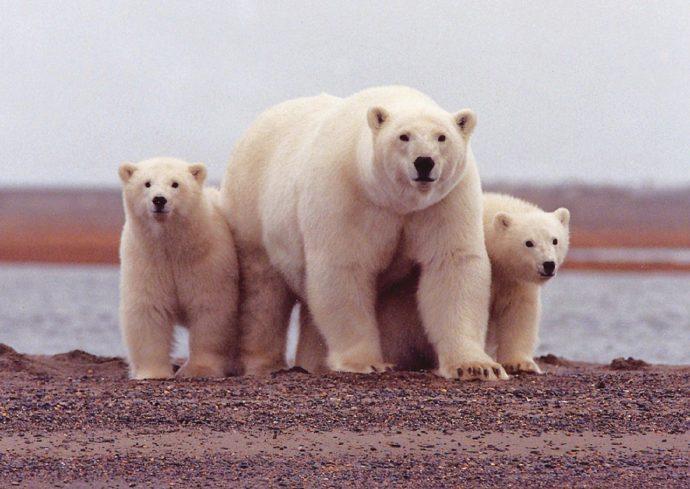 Wildlife webcam